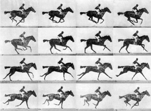 "Eadweard Muybridge, Human and Animal Locomotion, plate 626, thoroughbred bay mare ""Annie G."" galloping"